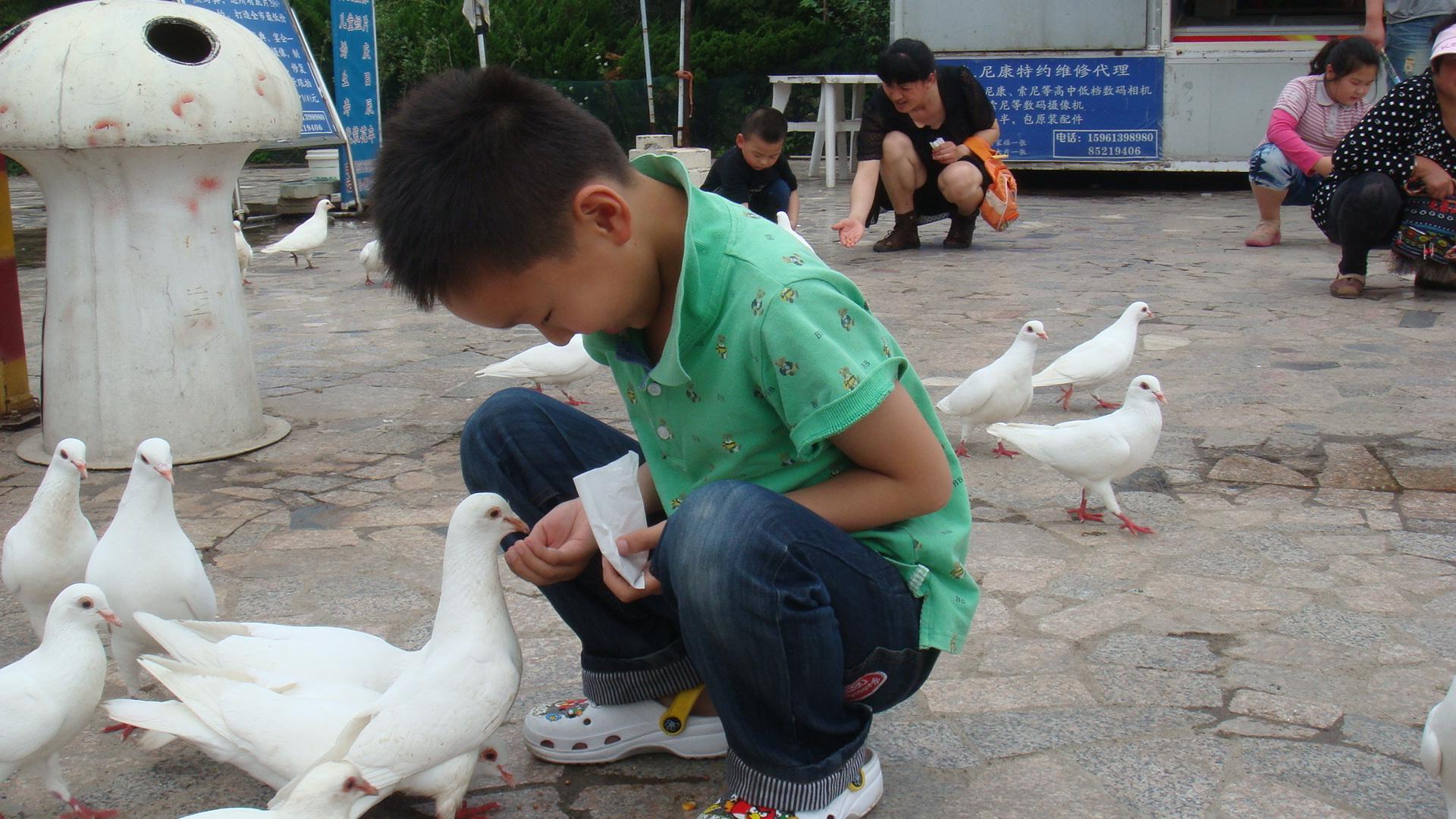 爱护小动物 - 红领巾相约中国梦动态上传
