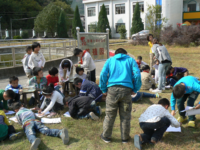 中国梦,生态和谐梦--浙江省永康市小学新楼队员小学汇西地址图片