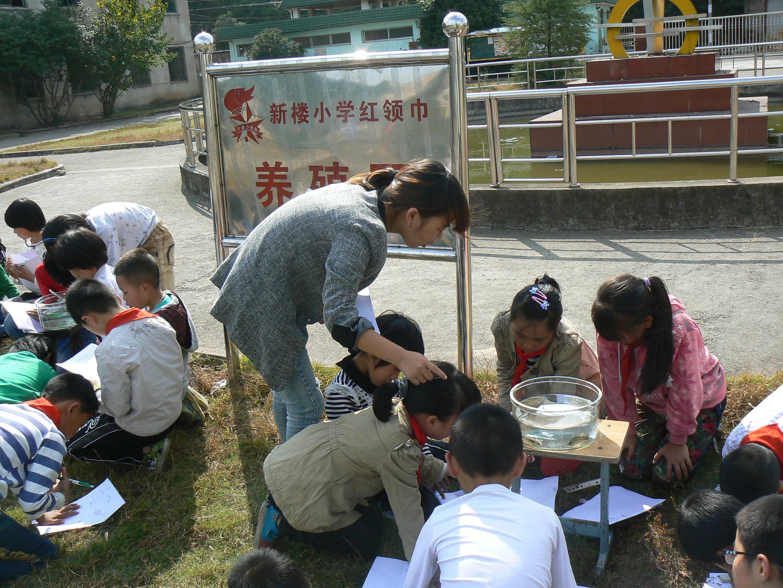 中国梦,新楼和谐梦--浙江省永康市队员小学生态母广小学图片