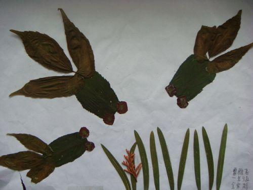 景宁县澄照小学:举行树叶剪贴画比赛
