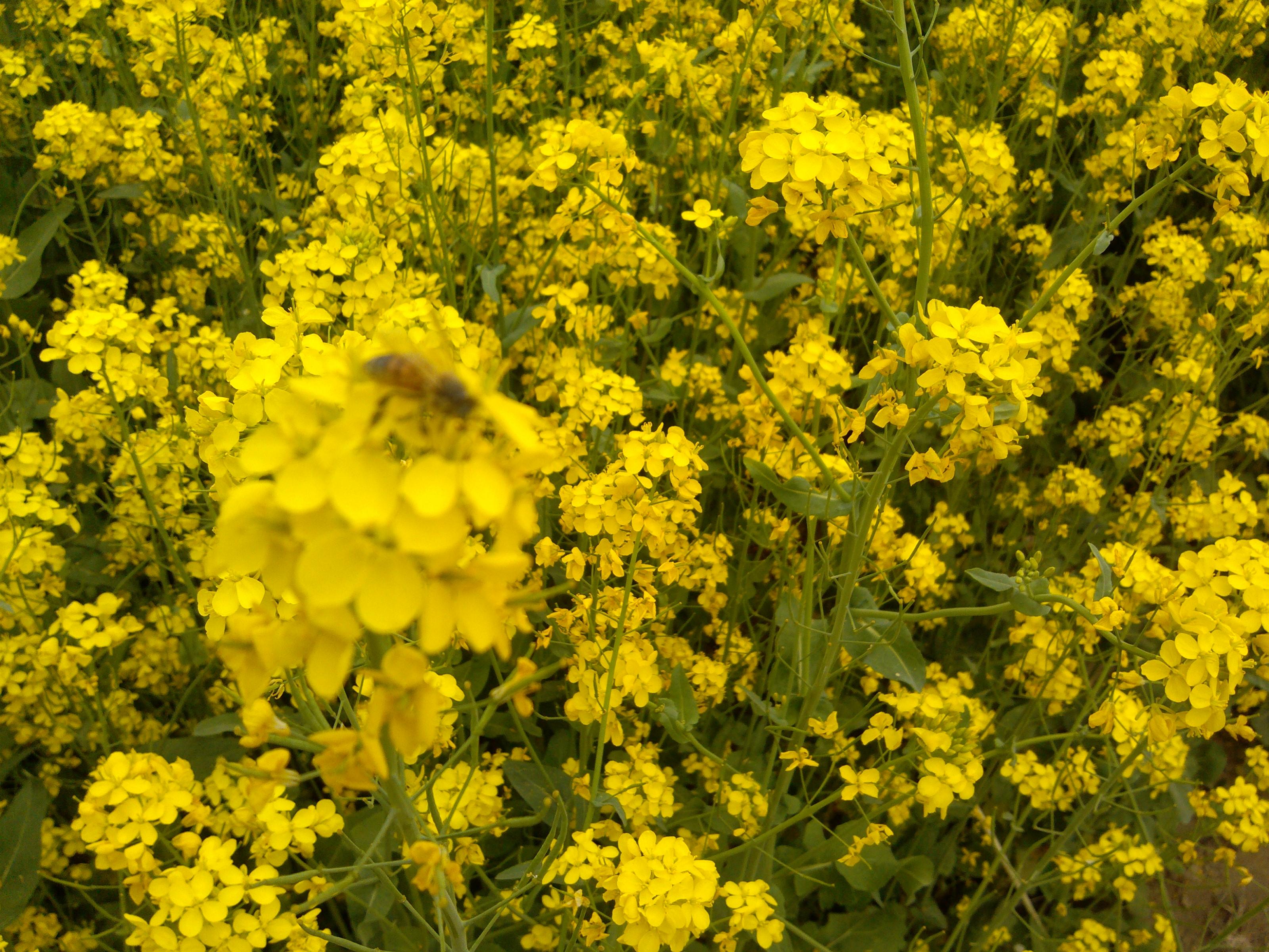 春天动态大图片