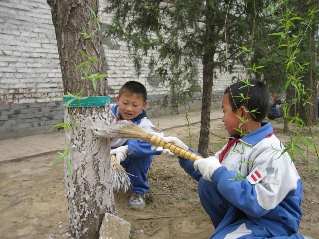 五年级1班,宋静怡,指导教师于秋华 《爱护小树苗》校园里的小树苗是