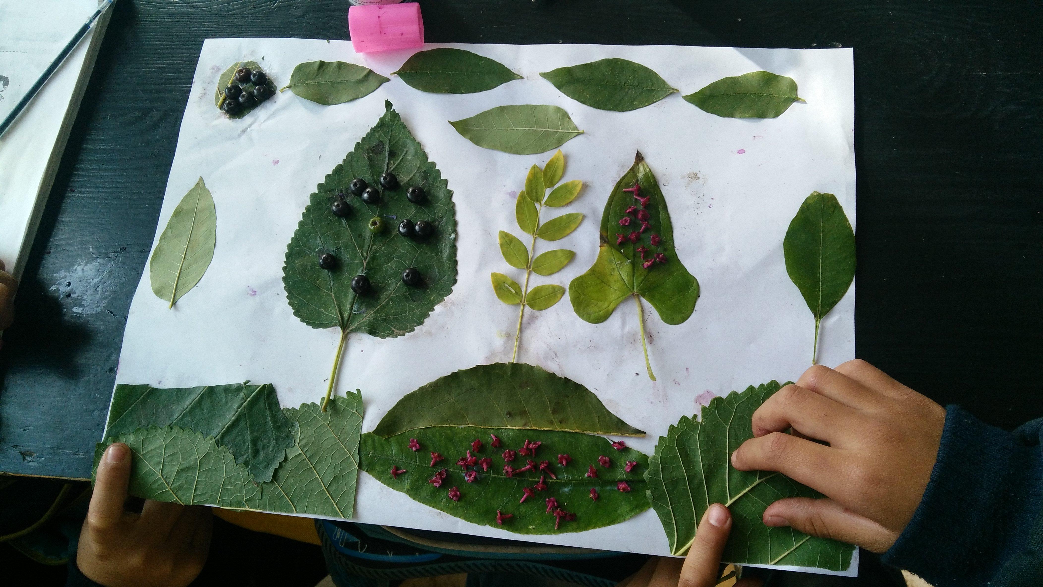 三年级举行创意树叶贴画活动
