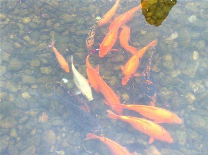 风景优美,一条小河穿城而过,河水清澈见底,鱼儿成群地在里面游来游去.